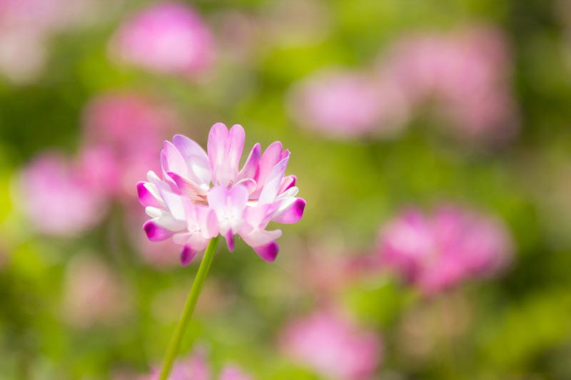 ★春に連想される五感、第六感、第七感、第八感